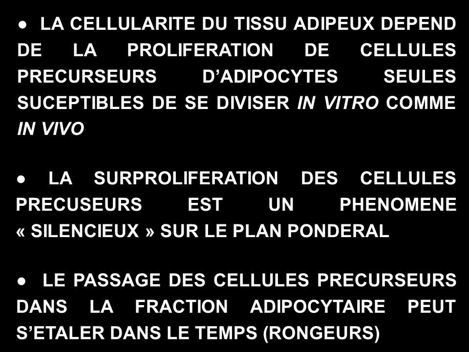 LA CELLULARITE DU TISSU ADIPEUX DEPEND DE LA PROLIFERATION DE CELLULES PRECURSEURS DADIPOCYTES SEULES SUCEPTIBLES DE SE DIVISER IN VITRO COMME IN VIVO