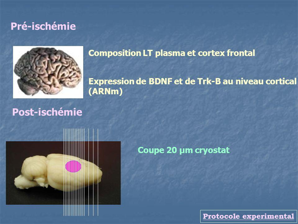 Protocole experimental Expression de BDNF et de Trk-B au niveau cortical (ARNm) Pré-ischémie Post-ischémie Coupe 20 µm cryostat Composition LT plasma