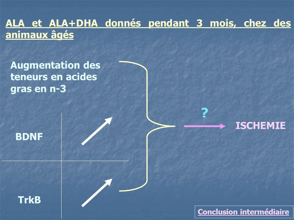 Conclusion intermédiaire ALA et ALA+DHA donnés pendant 3 mois, chez des animaux âgés TrkB BDNF ISCHEMIE ? Augmentation des teneurs en acides gras en n