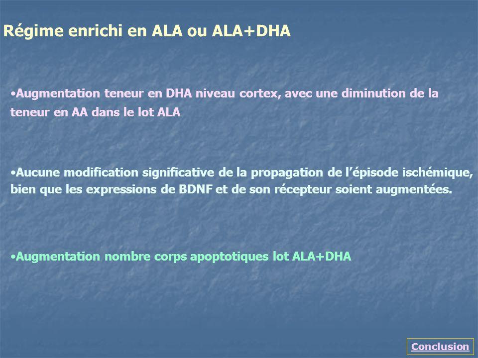 Conclusion Régime enrichi en ALA ou ALA+DHA Augmentation teneur en DHA niveau cortex, avec une diminution de la teneur en AA dans le lot ALA Aucune mo