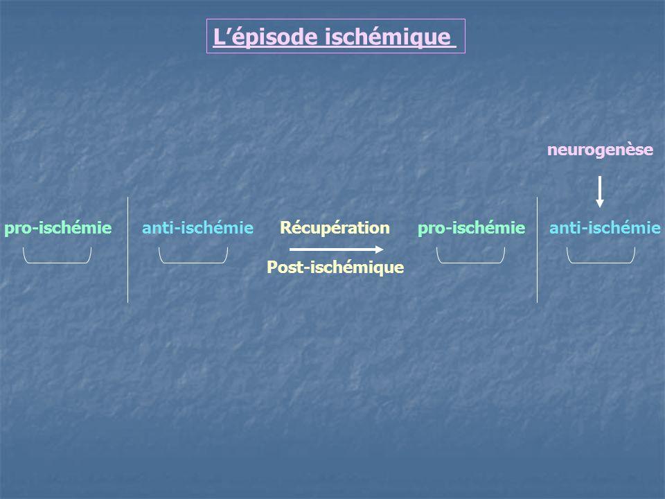 Lépisode ischémique pro-ischémie anti-ischémie Récupération Post-ischémique pro-ischémie anti-ischémie neurogenèse