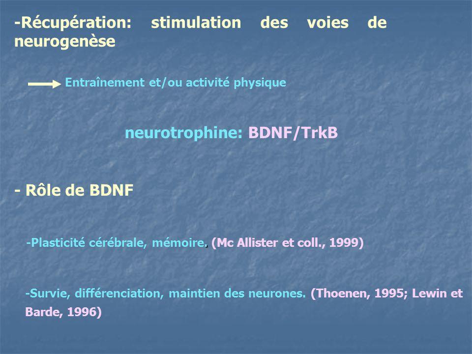 -Récupération: stimulation des voies de neurogenèse Entraînement et/ou activité physique neurotrophine: BDNF/TrkB. -Plasticité cérébrale, mémoire. (Mc