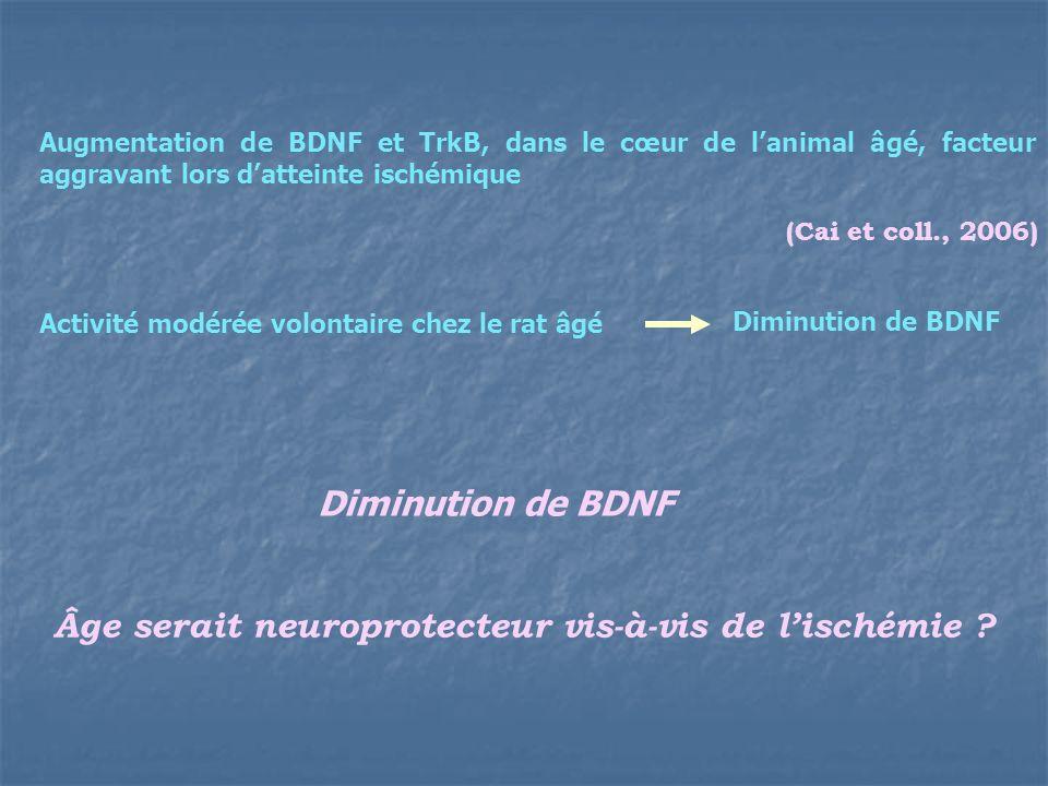 (Cai et coll., 2006) Augmentation de BDNF et TrkB, dans le cœur de lanimal âgé, facteur aggravant lors datteinte ischémique Activité modérée volontair