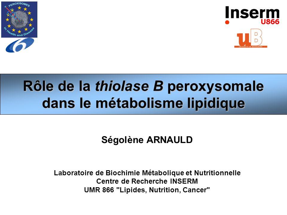 Rôle de la thiolase B peroxysomale dans le métabolisme lipidique Ségolène ARNAULD Laboratoire de Biochimie Métabolique et Nutritionnelle Centre de Rec