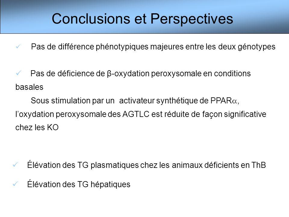 Conclusions et Perspectives Pas de différence phénotypiques majeures entre les deux génotypes Pas de déficience de β-oxydation peroxysomale en conditi