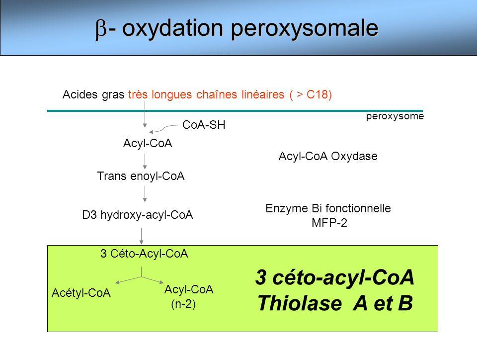 - oxydation peroxysomale - oxydation peroxysomale Acyl-CoA Trans enoyl-CoA D3 hydroxy-acyl-CoA 3 Céto-Acyl-CoA Acétyl-CoA Acyl-CoA (n-2) Acides gras t