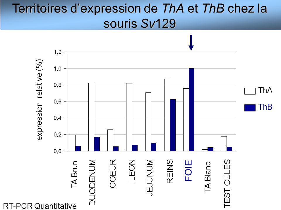 expression relative (%) TA Brun COEUR DUODENUM ILEON JEJUNUM REINS FOIE TA Blanc TESTICULES ThB ThA RT-PCR Quantitative Territoires dexpression de ThA