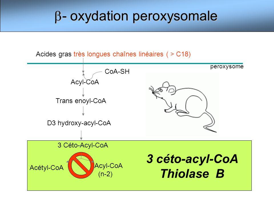3 céto-acyl-CoA Thiolase B - oxydation peroxysomale - oxydation peroxysomale Acyl-CoA Trans enoyl-CoA D3 hydroxy-acyl-CoA 3 Céto-Acyl-CoA Acétyl-CoA A