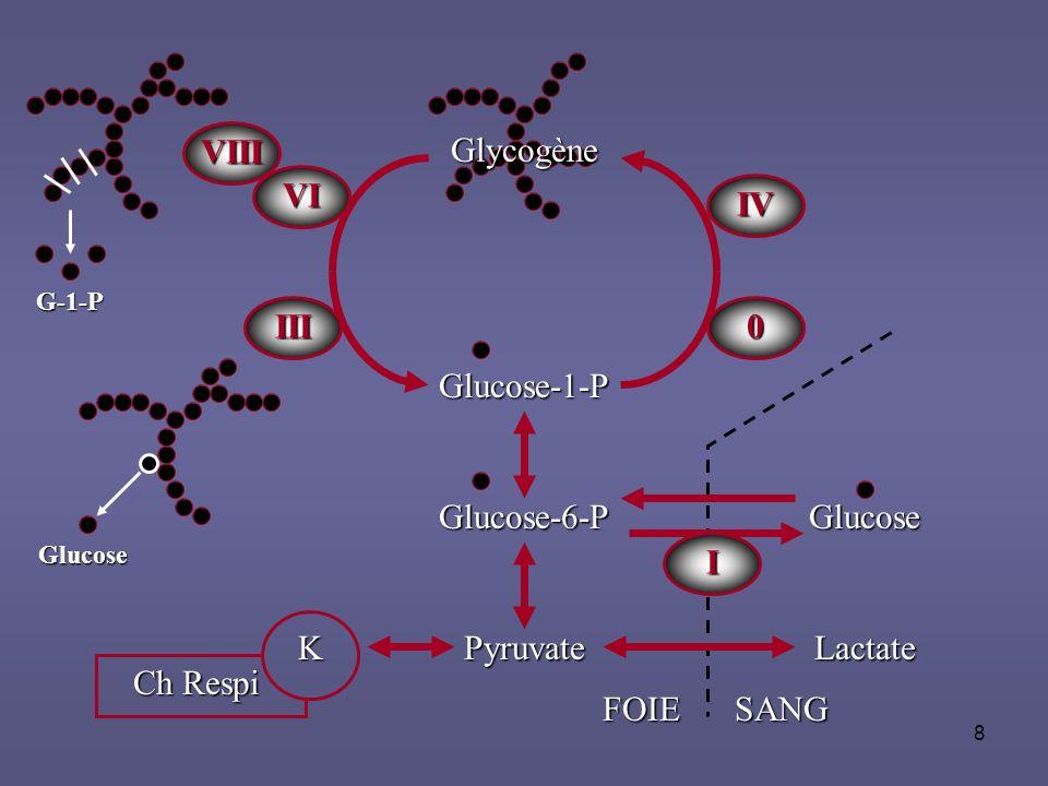 8 Glycogène Glucose-1-P Glucose-6-P Pyruvate Glucose IV I 0III VIII VI G-1-P Glucose Lactate FOIESANG K Ch Respi