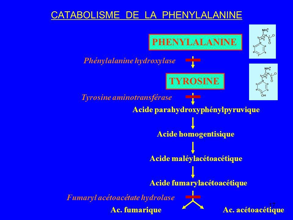 17 CATABOLISME DE LA PHENYLALANINE PHENYLALANINE TYROSINE Acide parahydroxyphénylpyruvique Acide homogentisique Acide maléylacétoacétique Acide fumary