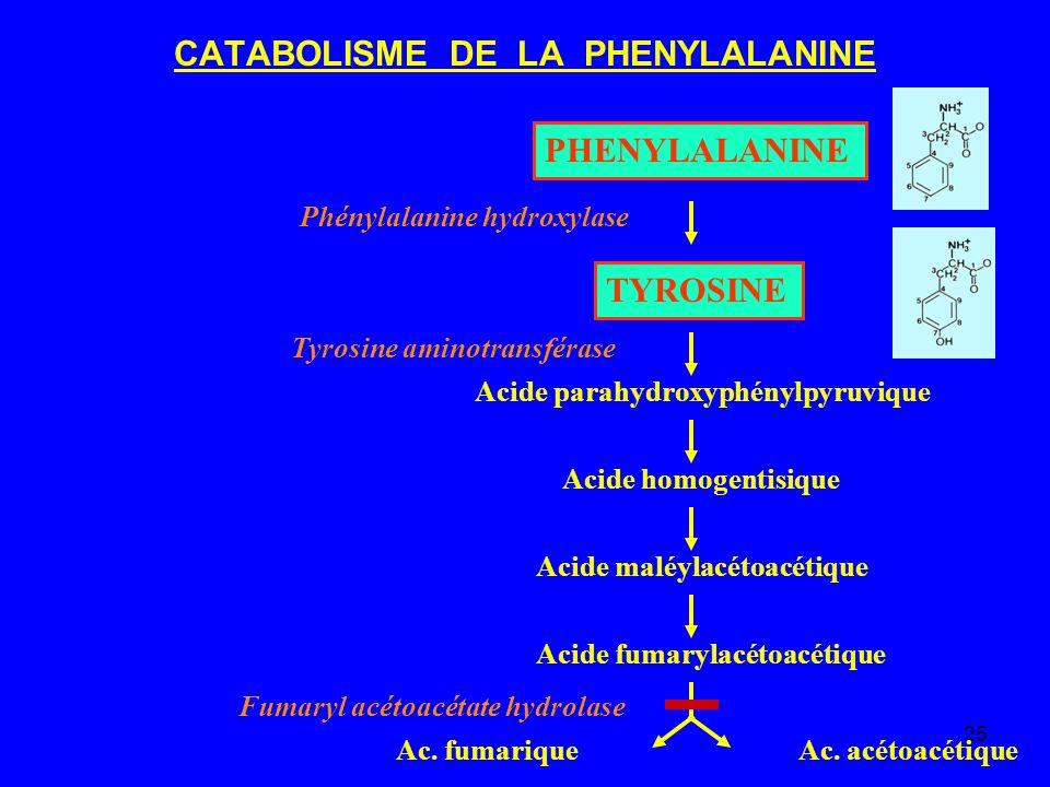 25 CATABOLISME DE LA PHENYLALANINE PHENYLALANINE TYROSINE Acide parahydroxyphénylpyruvique Acide homogentisique Acide maléylacétoacétique Acide fumary
