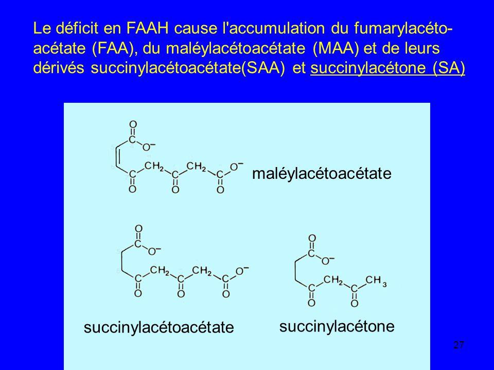 27 Le déficit en FAAH cause l'accumulation du fumarylacéto- acétate (FAA), du maléylacétoacétate (MAA) et de leurs dérivés succinylacétoacétate(SAA) e