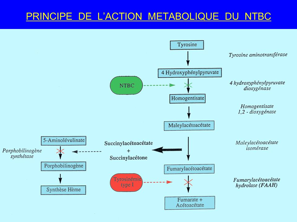 32 PRINCIPE DE LACTION METABOLIQUE DU NTBC