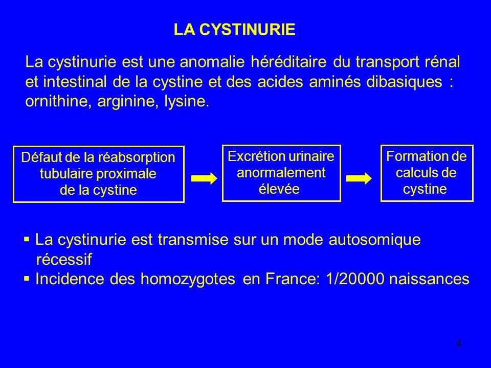 5 Il existe trois types de cystinuries: Type I: le gène déterminant le type I est SLC3A1, localisé en 2p16.3 ; le mode de transmission est complètement récessif, la cystine et les acides aminés dibasiques ne sont pas absorbés au niveau intestinal Types II et III: le gène déterminant les types II et III est SLC7A9, localisé sur le chromosome 19, 19q31.1; le transport intestinal est moins altéré que dans le type I
