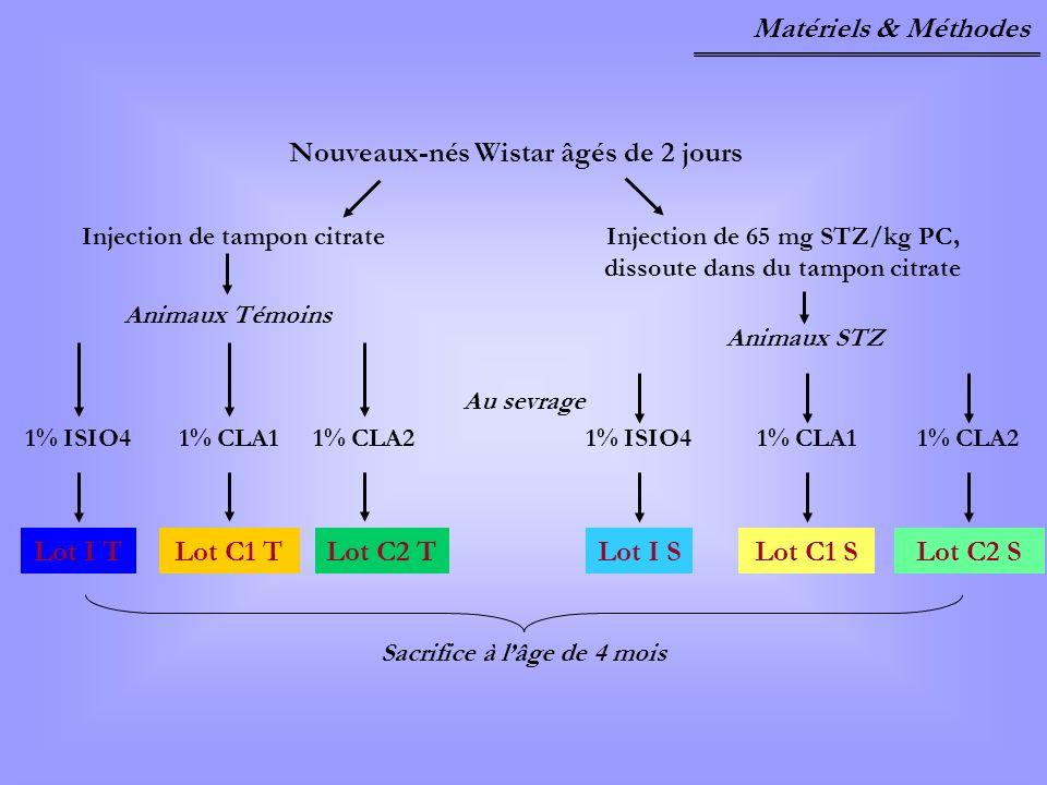 Matériels & Méthodes Nouveaux-nés Wistar âgés de 2 jours Sacrifice à lâge de 4 mois 1% ISIO41% CLA11% CLA21% ISIO41% CLA11% CLA2 Lot I TLot C1 TLot C2