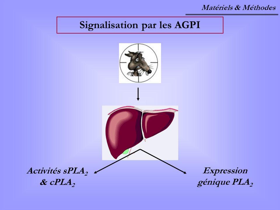 Signalisation par les AGPI Activités sPLA 2 & cPLA 2 Expression génique PLA 2 Matériels & Méthodes
