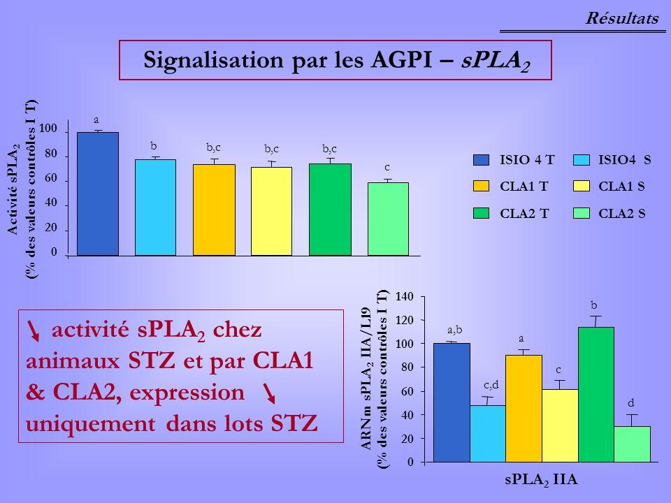0 20 40 60 80 100 a b b,c c (% des valeurs contrôles I T) Activité sPLA 2 Résultats Signalisation par les AGPI – sPLA 2 activité sPLA 2 chez animaux S