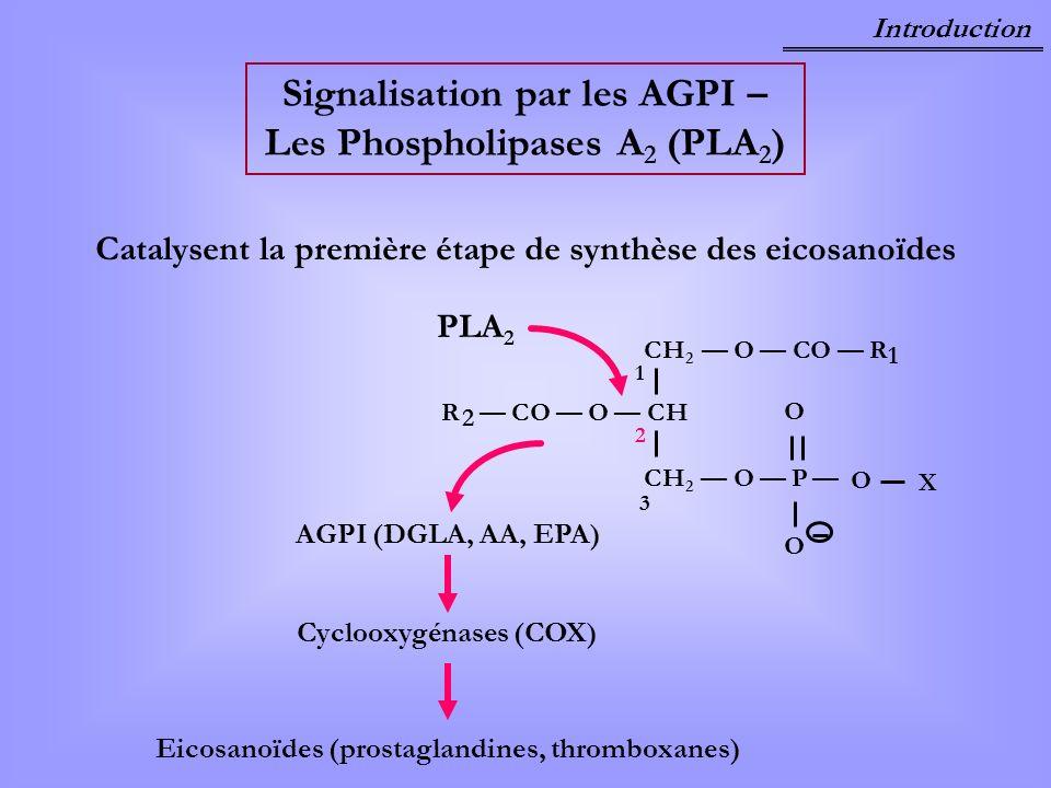Introduction Signalisation par les AGPI – Les Phospholipases A 2 (PLA 2 ) Catalysent la première étape de synthèse des eicosanoïdes R CO O CH 2 CH2H2