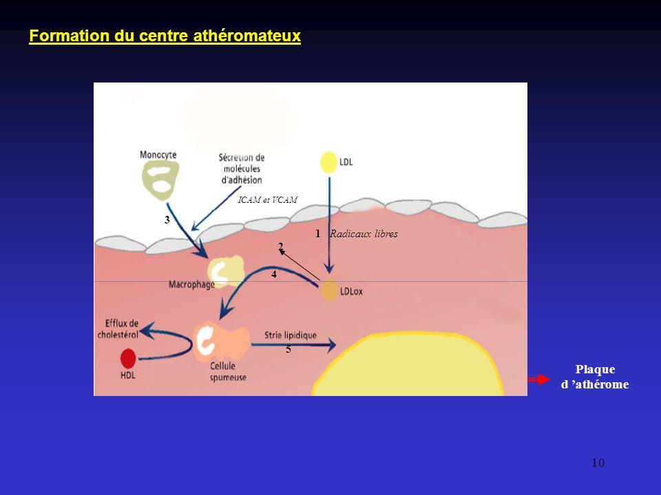 10 Plaque d athérome Radicaux libres ICAM et VCAM 1 2 3 4 5 Formation du centre athéromateux