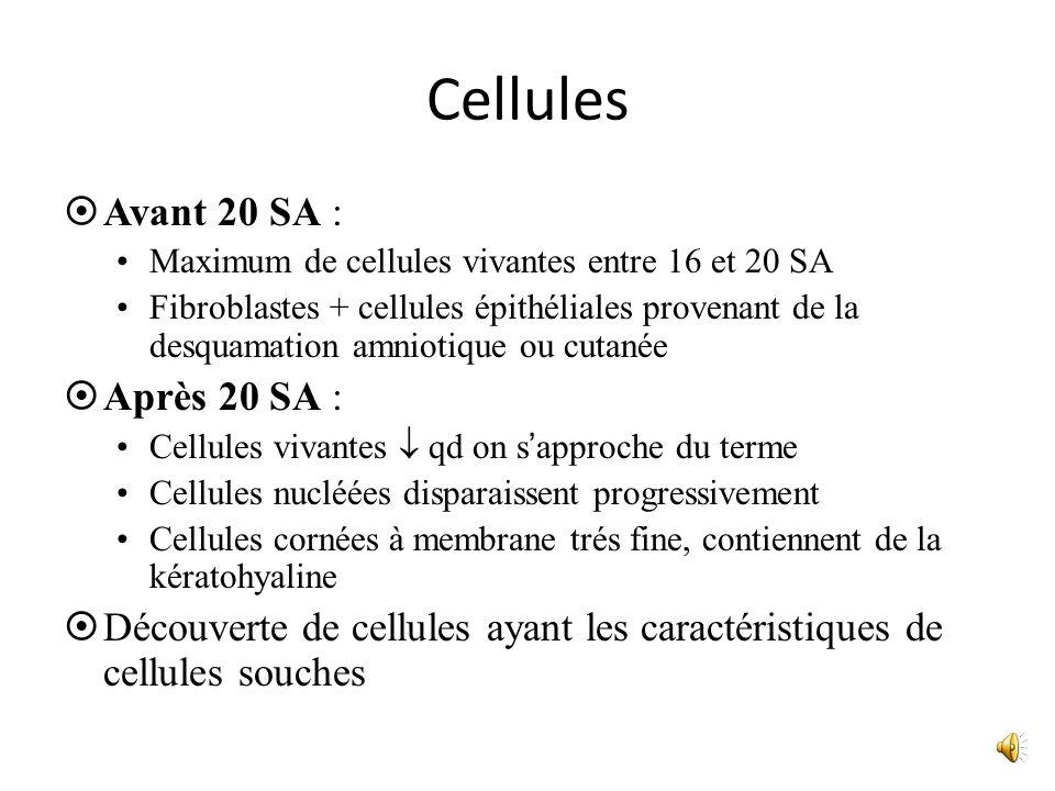 Cellules Avant 20 SA : Maximum de cellules vivantes entre 16 et 20 SA Fibroblastes + cellules épithéliales provenant de la desquamation amniotique ou