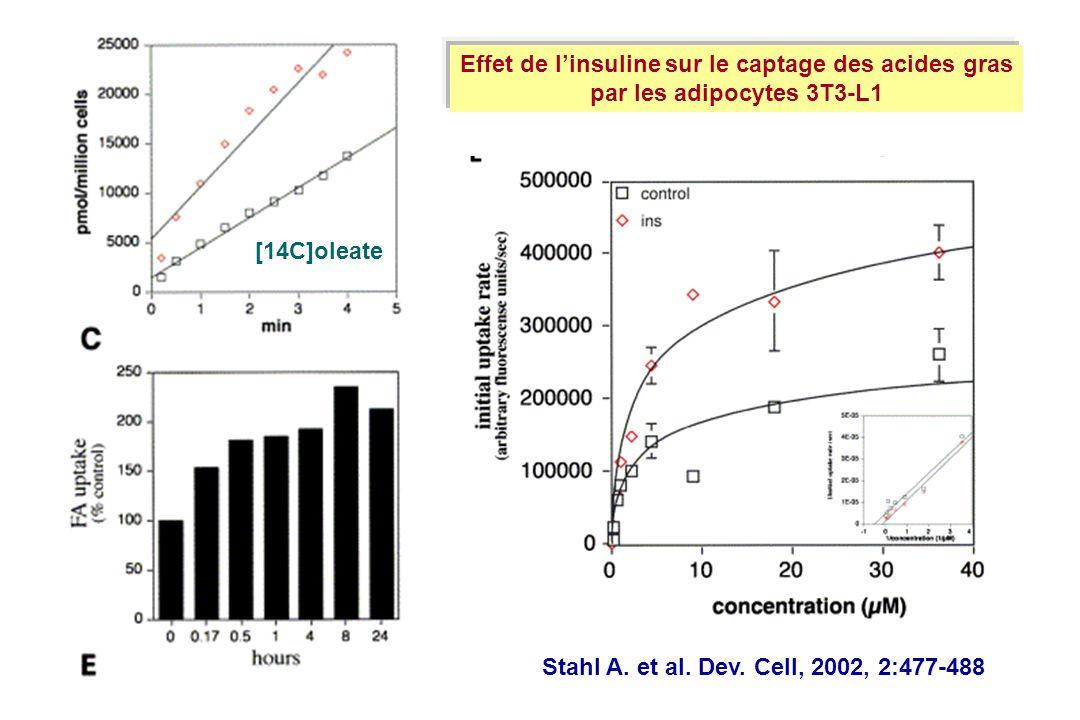 Effet de linsuline sur le captage des acides gras par les adipocytes 3T3-L1 Stahl A. et al. Dev. Cell, 2002, 2:477-488 [14C]oleate