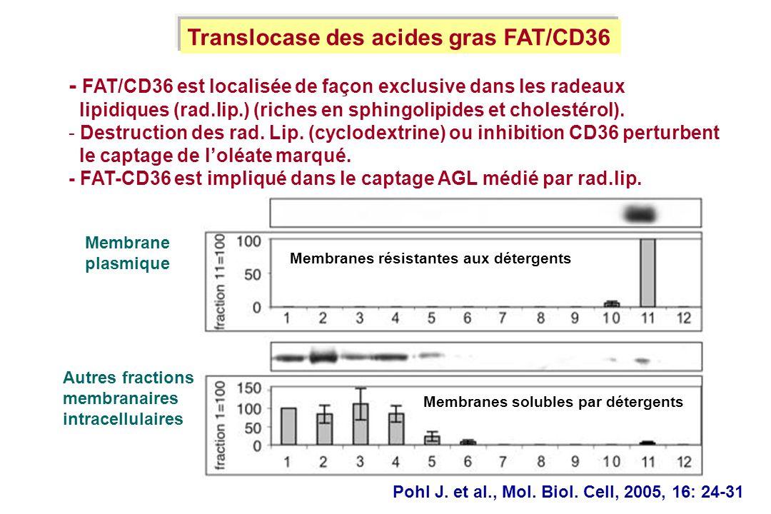 Pohl J. et al., Mol. Biol. Cell, 2005, 16: 24-31 - FAT/CD36 est localisée de façon exclusive dans les radeaux lipidiques (rad.lip.) (riches en sphingo