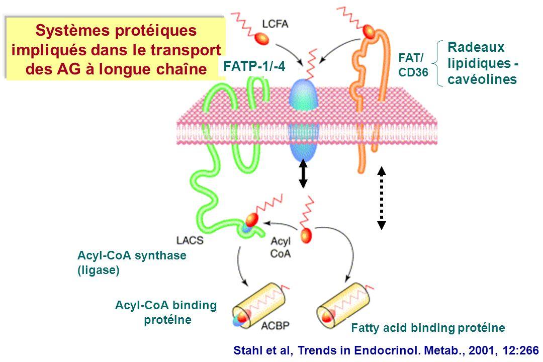 Stahl et al, Trends in Endocrinol. Metab., 2001, 12:266 Acyl-CoA synthase (ligase) Acyl-CoA binding protéine Fatty acid binding protéine Systèmes prot