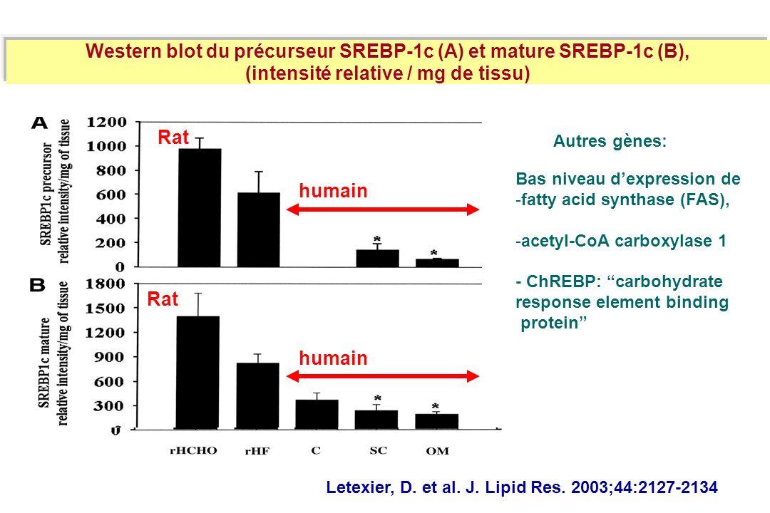 Letexier, D. et al. J. Lipid Res. 2003;44:2127-2134 Western blot du précurseur SREBP-1c (A) et mature SREBP-1c (B), (intensité relative / mg de tissu)