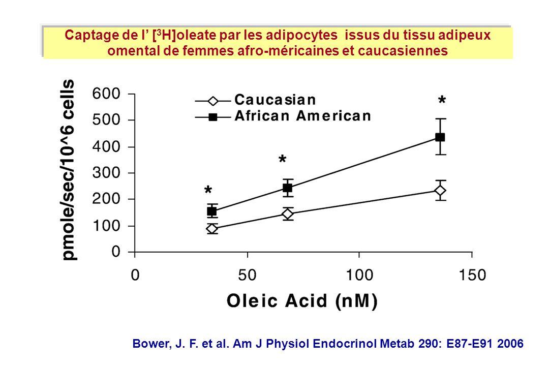 Bower, J. F. et al. Am J Physiol Endocrinol Metab 290: E87-E91 2006 Captage de l [ 3 H]oleate par les adipocytes issus du tissu adipeux omental de fem