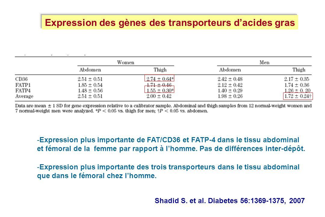 Shadid S. et al. Diabetes 56:1369-1375, 2007 Expression des gènes des transporteurs dacides gras -Expression plus importante des trois transporteurs d