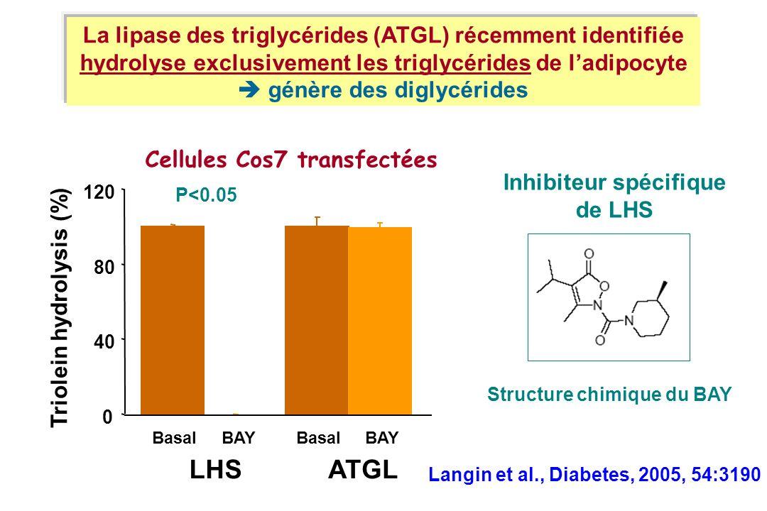 La lipase des triglycérides (ATGL) récemment identifiée hydrolyse exclusivement les triglycérides de ladipocyte génère des diglycérides Triolein hydro