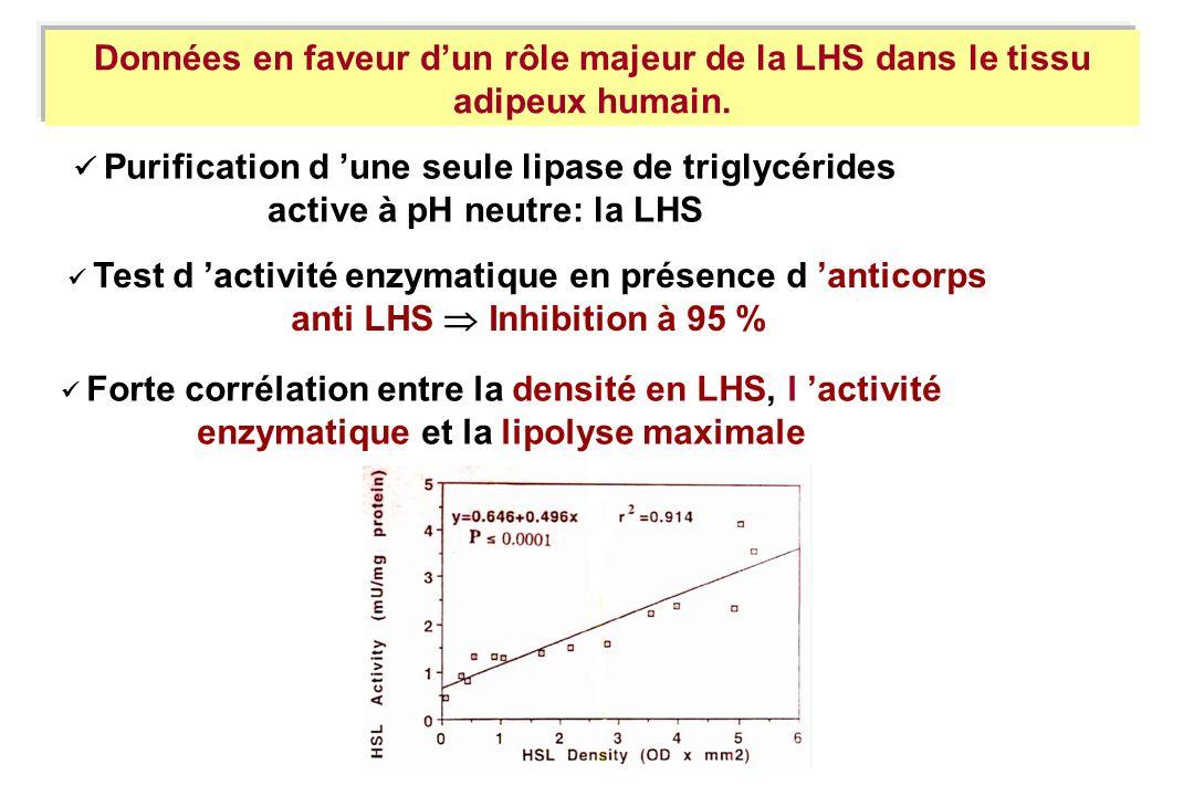 Données en faveur dun rôle majeur de la LHS dans le tissu adipeux humain. Purification d une seule lipase de triglycérides active à pH neutre: la LHS
