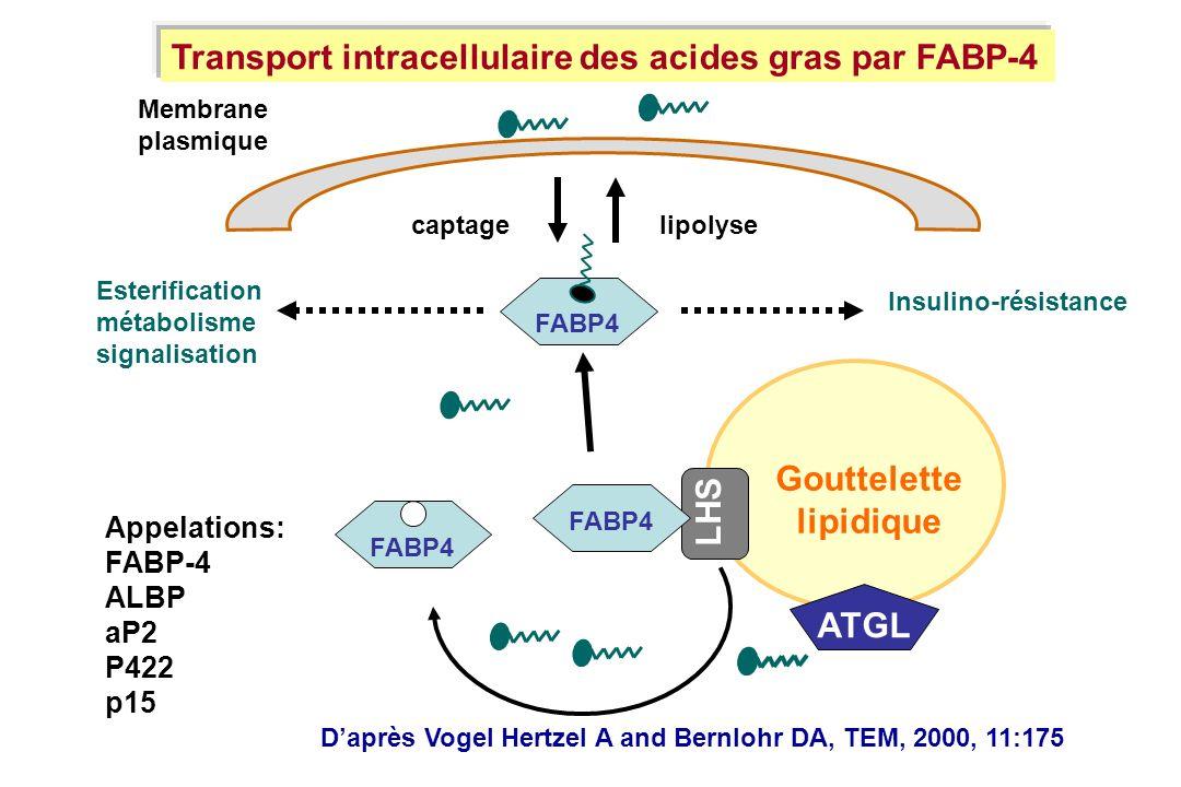 Membrane plasmique LHS Gouttelette lipidique FABP4 ATGL FABP4 captagelipolyse Esterification métabolisme signalisation Insulino-résistance Appelations