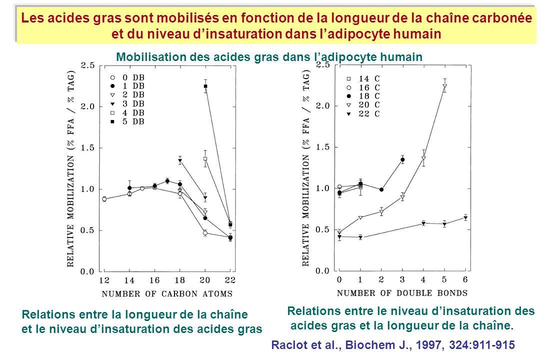 Relations entre la longueur de la chaîne et le niveau dinsaturation des acides gras Les acides gras sont mobilisés en fonction de la longueur de la ch