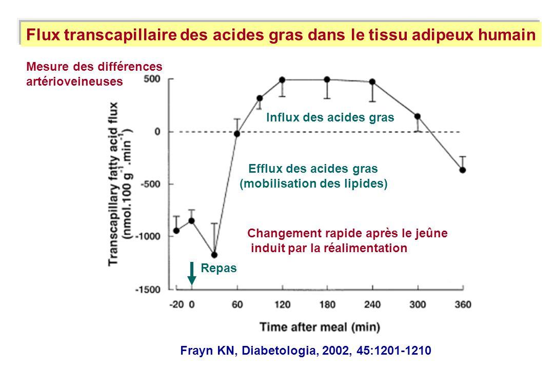 Flux transcapillaire des acides gras dans le tissu adipeux humain Efflux des acides gras (mobilisation des lipides) Influx des acides gras Changement