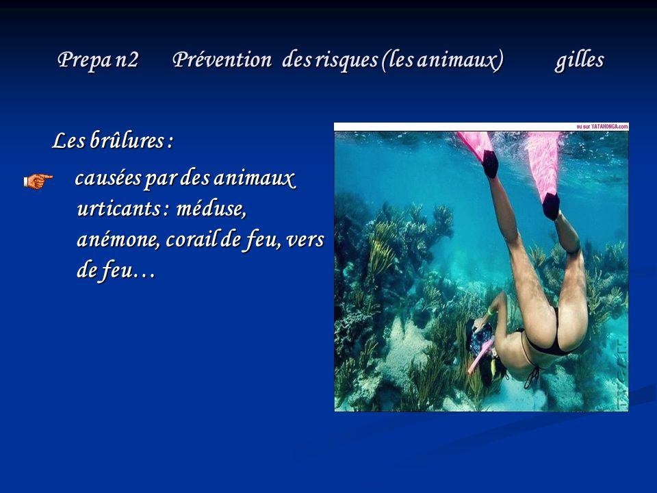 Prepa n2 Prévention des risques (les animaux) gilles Les brûlures : causées par des animaux urticants : méduse, anémone, corail de feu, vers de feu… c