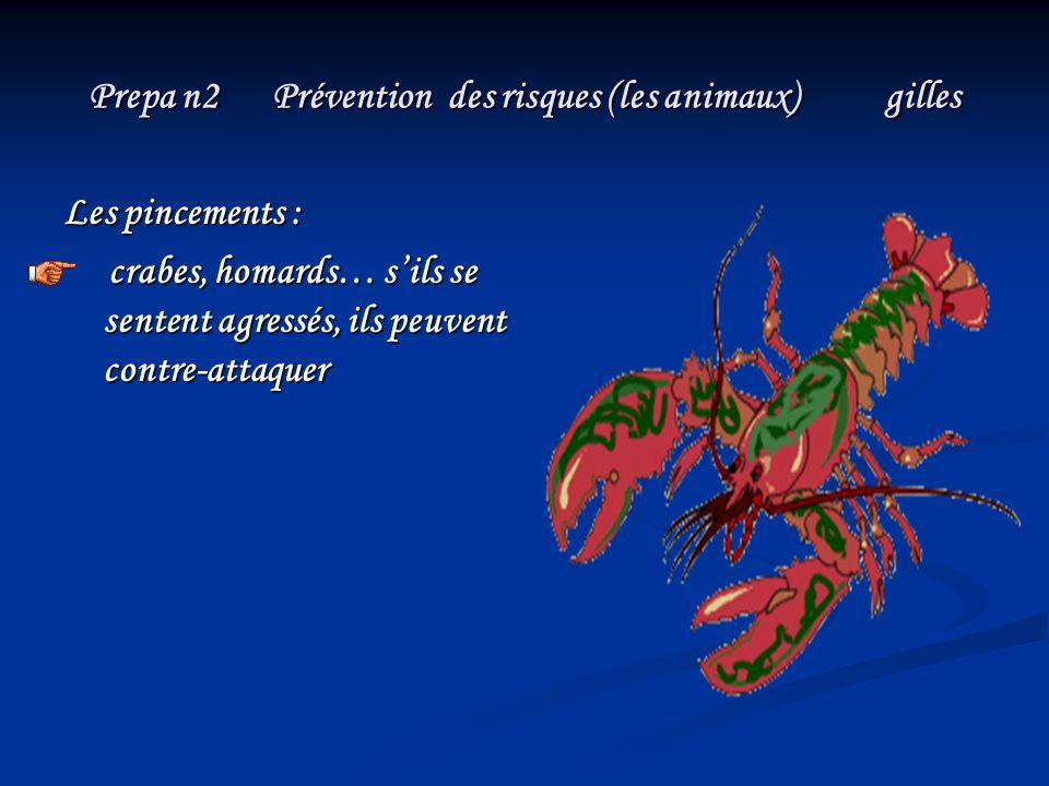 Prepa n2 Prévention des risques (les animaux) gilles Les pincements : crabes, homards… sils se sentent agressés, ils peuvent contre-attaquer crabes, h