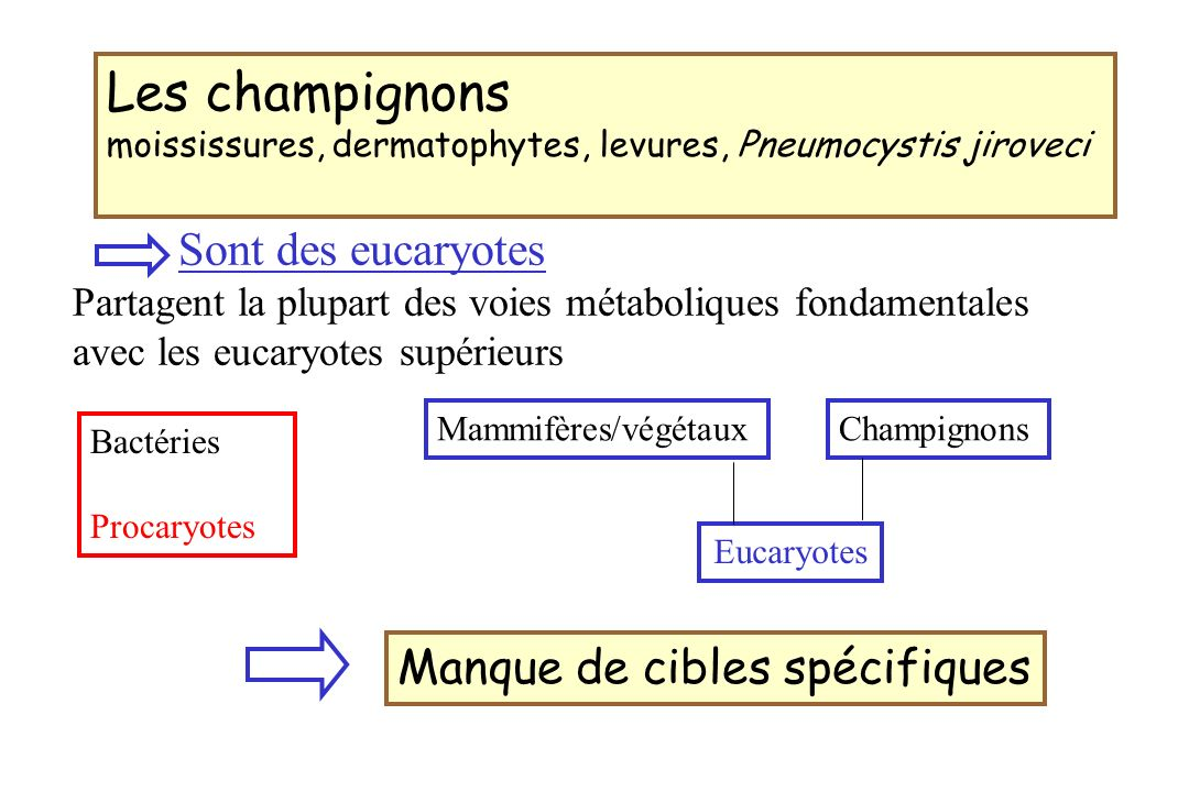 Les champignons moississures, dermatophytes, levures, Pneumocystis jiroveci Bactéries Procaryotes Eucaryotes Sont des eucaryotes Partagent la plupart