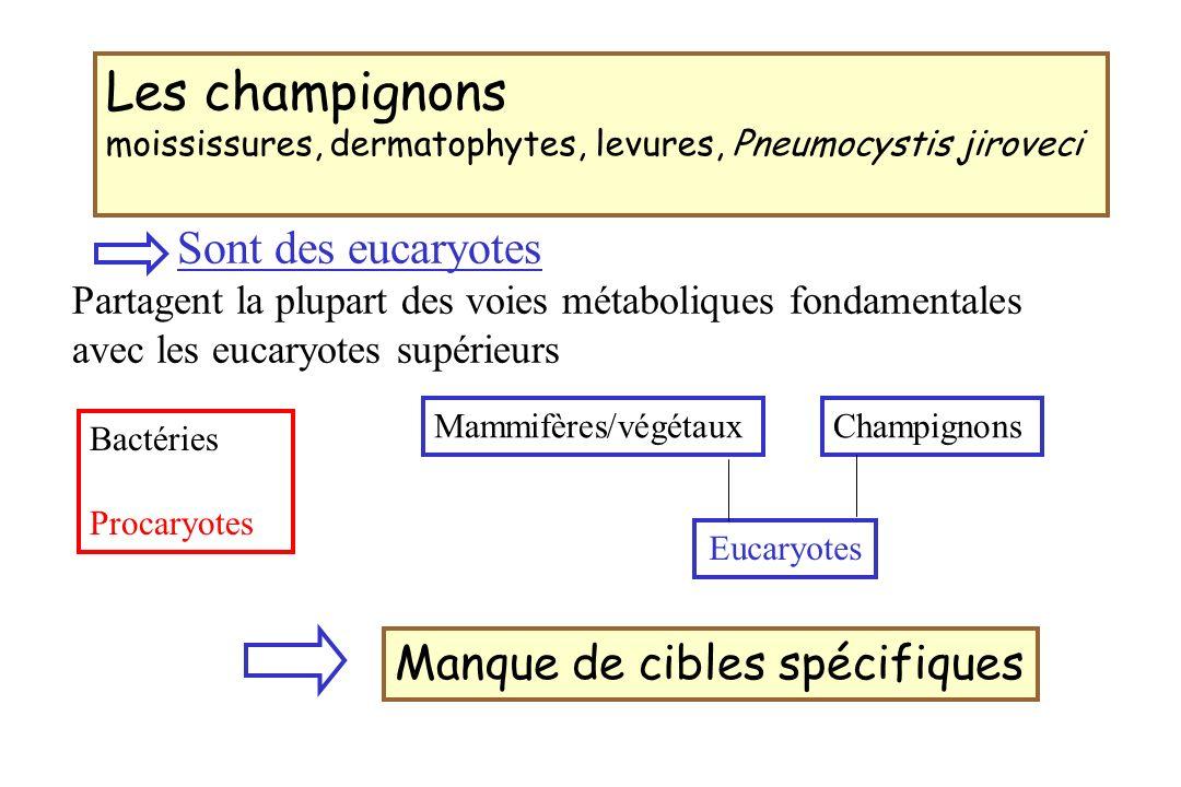 5-Fluorocytosine 5-FC (Ancotil®) 5-FC Cytosine perméase 5-F-Uracile Cytosine désaminase 5-FUTP5-FdUMP Synthése protéique Synthése ADN 5-FC ARNm Activité fongicide spectre antifongique Candida, Cryptococcus neoformans espèce sensible : CMI < 4µg/ml
