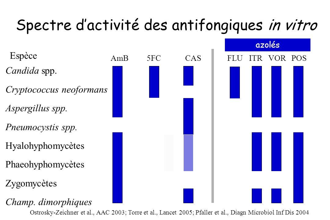 Spectre dactivité des antifongiques in vitro Candida spp. Cryptococcus neoformans Aspergillus spp. Pneumocystis spp. Hyalohyphomycètes Phaeohyphomycèt