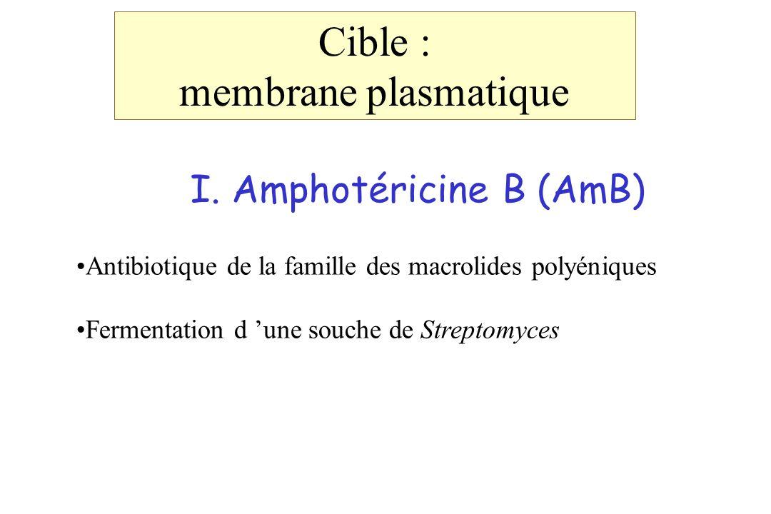 I. Amphotéricine B (AmB) Antibiotique de la famille des macrolides polyéniques Fermentation d une souche de Streptomyces Cible : membrane plasmatique