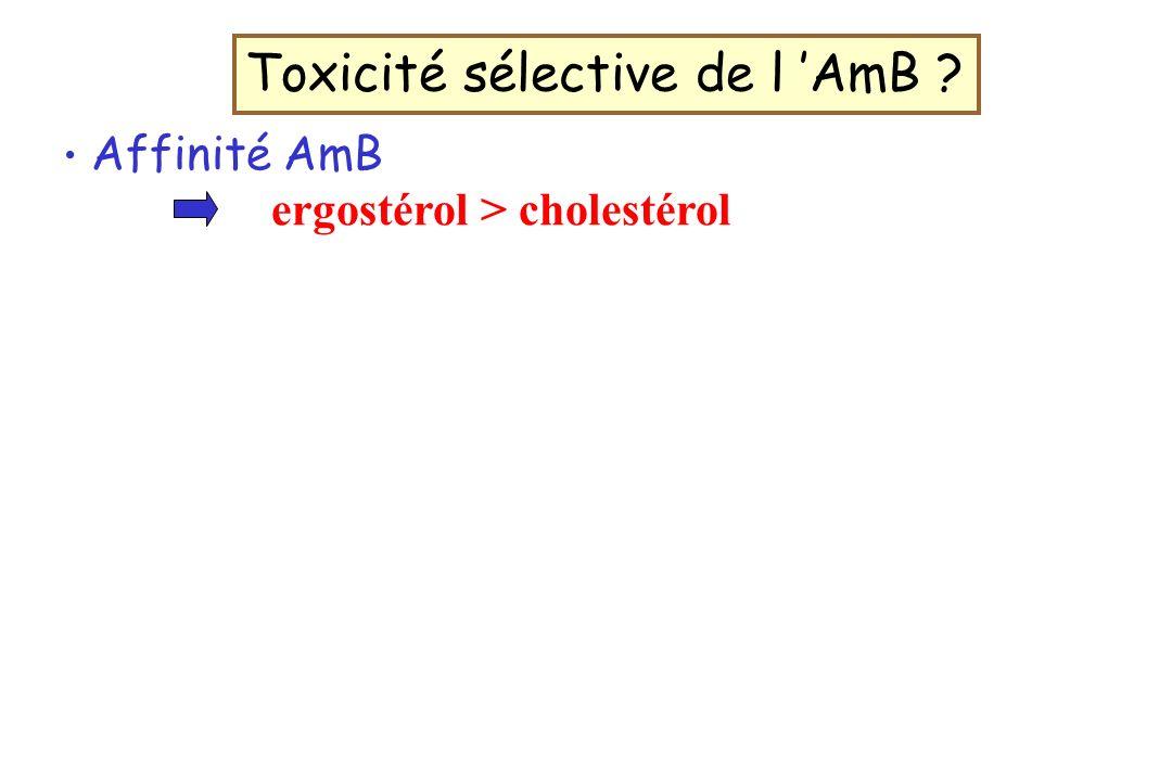 Affinité AmB ergostérol > cholestérol Toxicité sélective de l AmB ?
