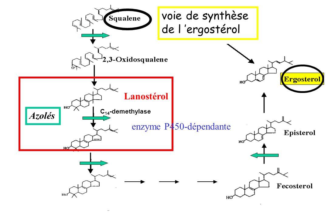 C 14 -demethylase Thiocarbamates C 14 -demethylase enzyme P450-dépendante Lanostérol Azolés voie de synthèse de l ergostérol