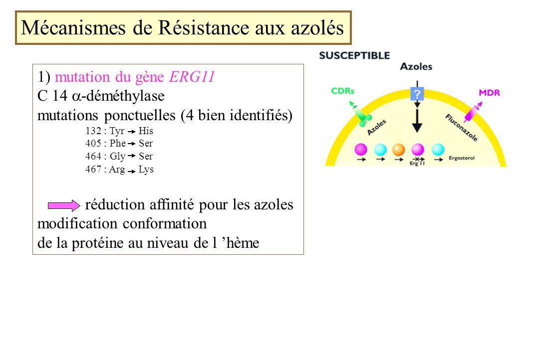 Mécanismes de Résistance aux azolés 1) mutation du gène ERG11 C 14 -déméthylase mutations ponctuelles (4 bien identifiés) 132 : Tyr His 405 : Phe Ser