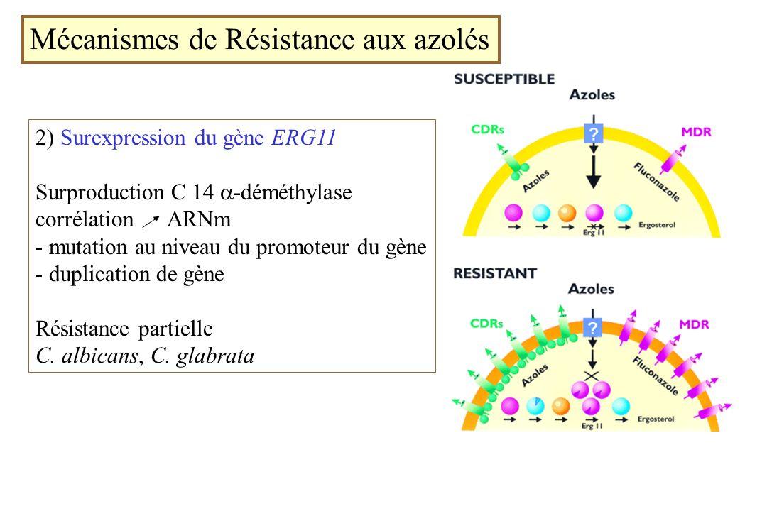 Mécanismes de Résistance aux azolés 2) Surexpression du gène ERG11 Surproduction C 14 -déméthylase corrélation ARNm - mutation au niveau du promoteur