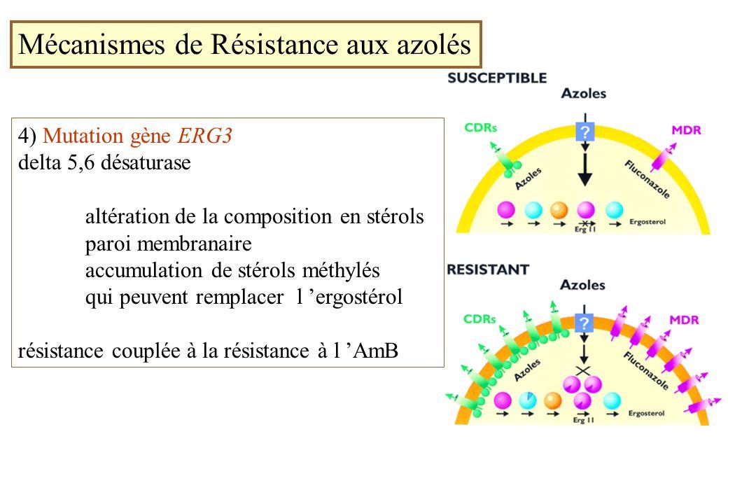 Mécanismes de Résistance aux azolés 4) Mutation gène ERG3 delta 5,6 désaturase altération de la composition en stérols paroi membranaire accumulation