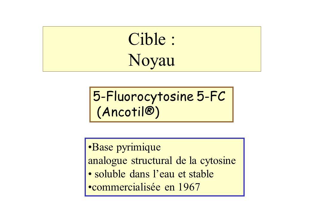 Cible : Noyau 5-Fluorocytosine 5-FC (Ancotil®) Base pyrimique analogue structural de la cytosine soluble dans leau et stable commercialisée en 1967