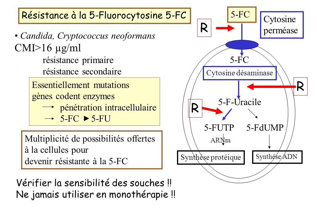 Résistance à la 5-Fluorocytosine 5-FC Candida, Cryptococcus neoformans CMI>16 µg/ml résistance primaire résistance secondaire Multiplicité de possibil