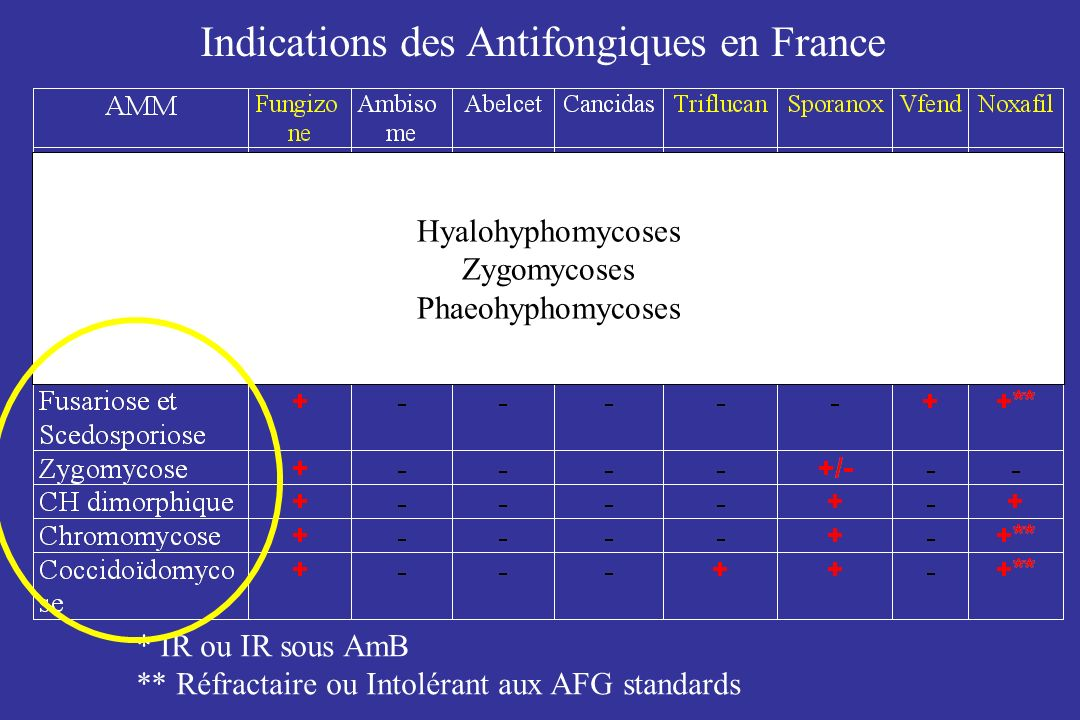 Indications des Antifongiques en France * IR ou IR sous AmB ** Réfractaire ou Intolérant aux AFG standards Hyalohyphomycoses Zygomycoses Phaeohyphomyc