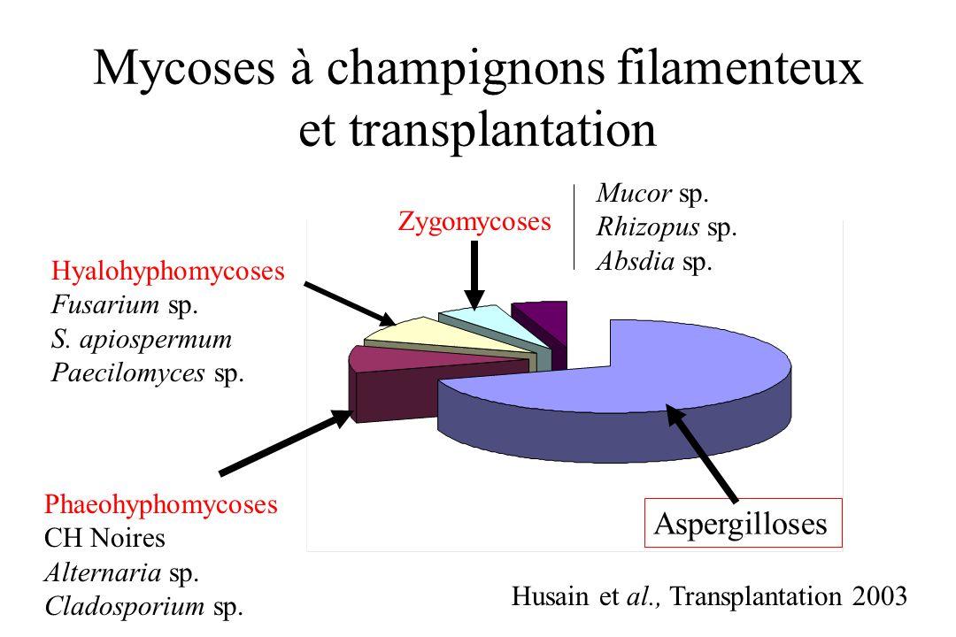 Mycoses à champignons filamenteux et transplantation Husain et al., Transplantation 2003 Hyalohyphomycoses Fusarium sp. S. apiospermum Paecilomyces sp